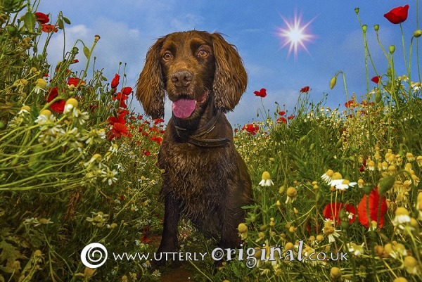 Dog Photography - Toffee