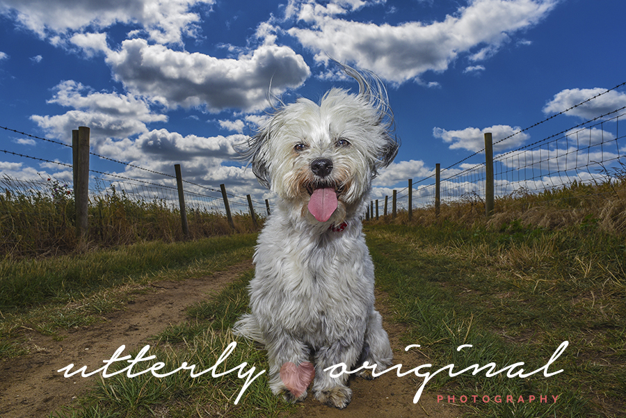 Dog Photography, Dog Photographer, UK, England, Iceland, Reykjavik