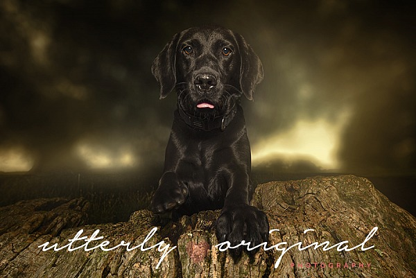 Dog Photography - Rosie
