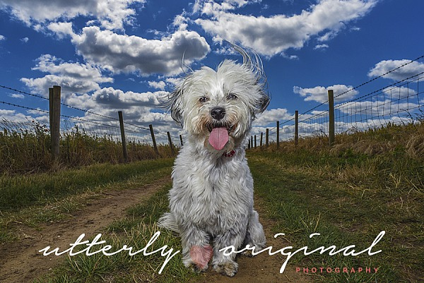 Dog Photography - Charlie