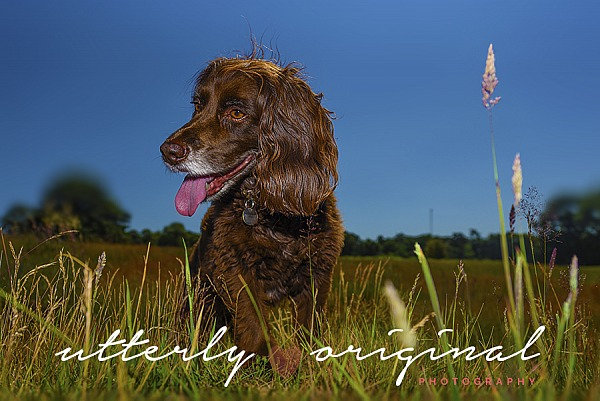 Dog Photography - Charlie in the Park